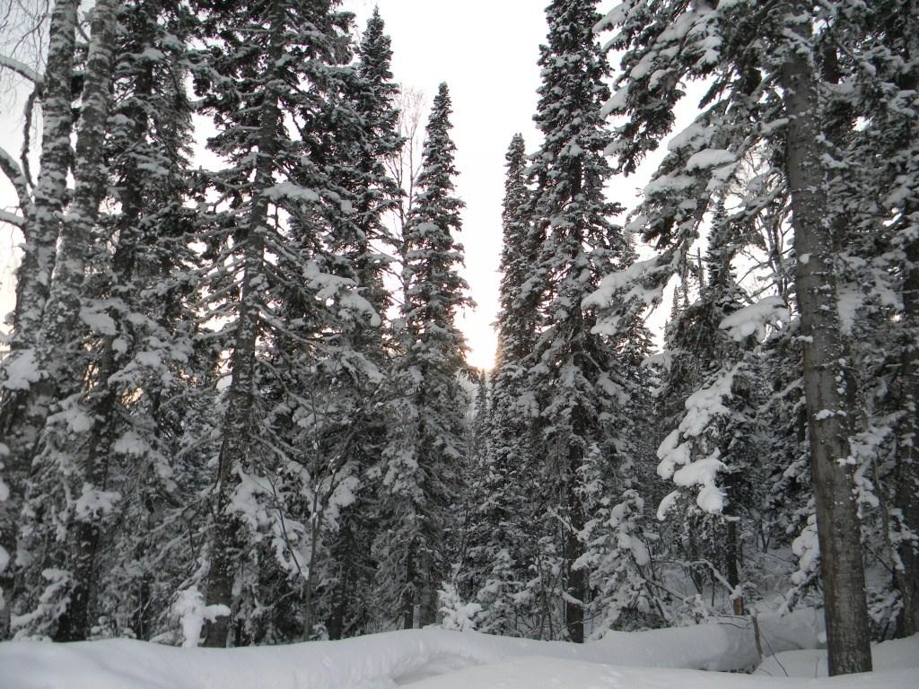 http://www.omsktour.ru/foto/sheregesh/otzyv-turistov-ays-tur/les-v-sheregeshe.jpg